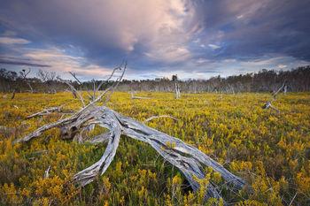 salt marsh, everglades, Florida, nature, photography, florida national parks