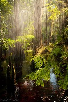 fisheating, creek, cypress, rain, florida, south florida, nature, photography