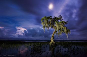 cypress, osceola national forest, florida, moon, north florida, nature, photography
