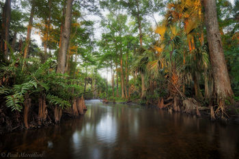 Loxahatchee River, Florida, morning, south florida, jupiter, nature, photography,