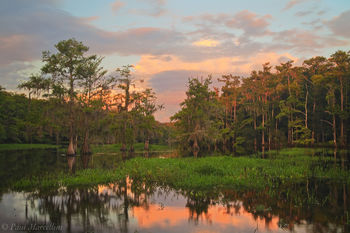 fisheating creek, sunset, florida, south florida, nature, photography,