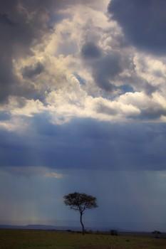 masai mara, acacia, stormy, kenya, africa