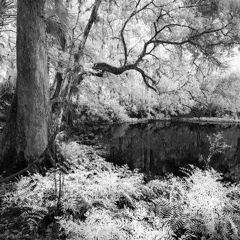 Hillsborough River State Park, Florida, infrared, tampa