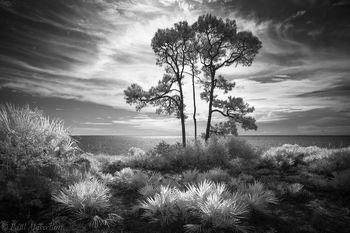Cape San Blas, St. Joseph Peninsula State Park, Florida
