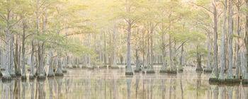 southeast us, summer, swamp