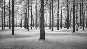 pineland, lakeland, florida