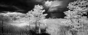 Everglades National Park, Florida, storm, cypress