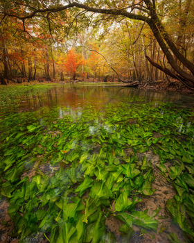 Chipola River, Florida, fall, north florida