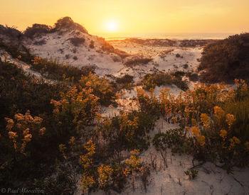 st joseph peninsula, cape san blas, florida, sand dune,sunset, flowers