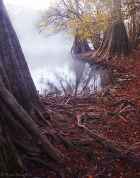 Suwannee Valley, Florida, fall, fog