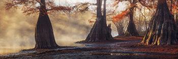 fall, sunrise, fog, cypress, Suwannee Valley, Florida