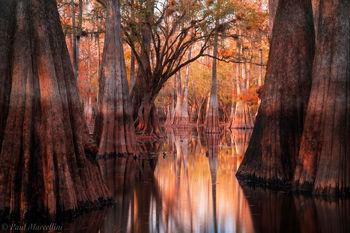 swamp, fall, autumn, cypress, Suwannee Valley, Florida