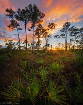 pine rocklands, Everglades National Park, Florida, sunset