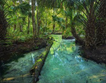 Chassahowitzka, Florida, spring, river