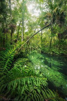 chassahowitzka river, chassahowitzka national wildlife refuge, spring
