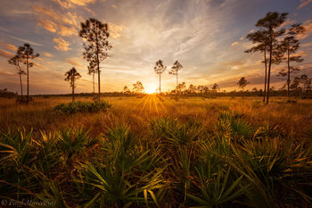 pinelands, Everglades National Park, Florida,