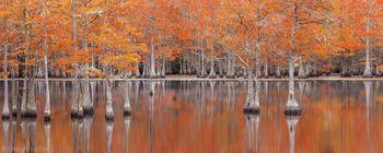 cypress, fall
