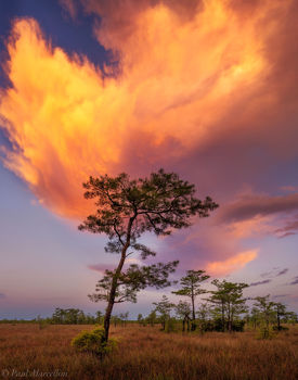 Big Cypress National Preserve, Florida, cypress, sunset