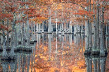 southeast, cypress, fall