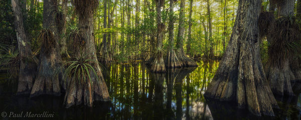 Big Cypress National Preserve, Florida, swamp, cypress dome, nature, photography