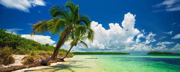 palms, florida keys, clouds, summer,