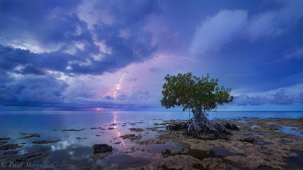 stormy, mangrove, lightning, morning, big pine key, florida, nature, photography
