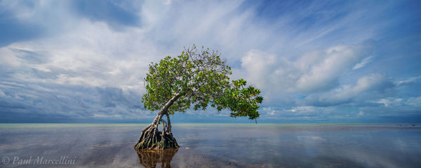 mangrove, florida keys, florida, summer, morning, nature, photography