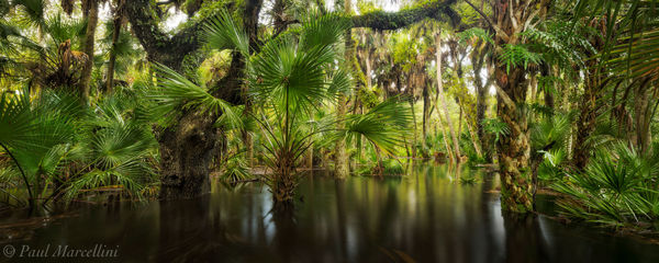 Myakka River State Park, Florida, flooded, nature, photography