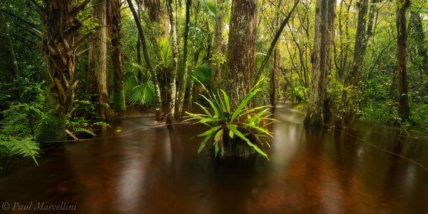 Big Cypress National Preserve, Florida, nature, photography, florida national parks