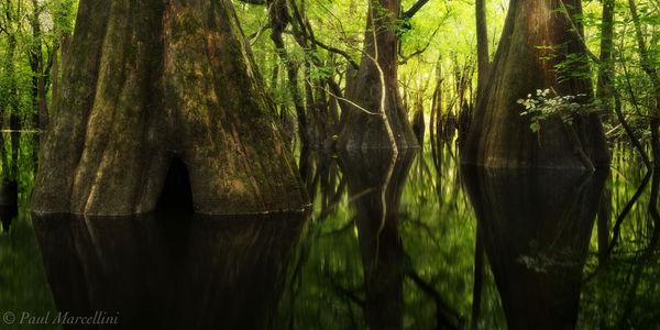 suwannee river valley, florida, north florida, nature, photography