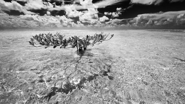 Florida Bay, Florida, red mangrove, summer, keys, florida keys, south florida, nature, photography