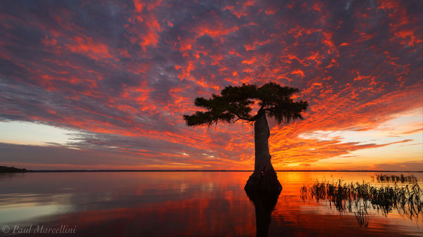 Blue Cypress Lake, FL, cypress, florida, south florida, nature, photography