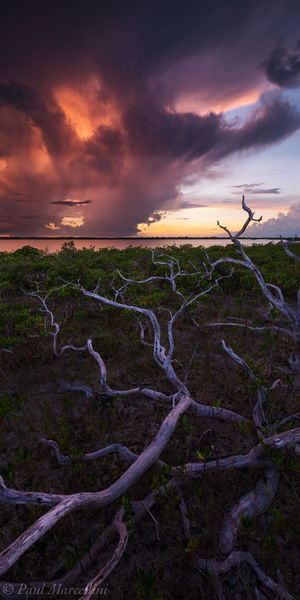 Little Torch Key, Florida Keys, Florida, branches, keys, south florida, nature, photography