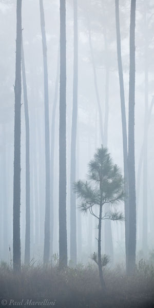everglades, pinelands, fog, lines, Florida, nature, photography, florida national parks