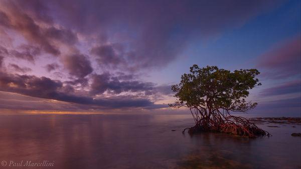 Big Pine Key, Florida Keys, Florida, mangrove, morning, keys, south florida, nature, photography