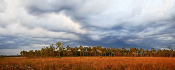 freshwater prairie, pinelands, everglades, storm, Florida, nature, photography, florida national parks