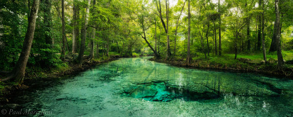 dogwood springs, santa fe river, florida, nature, photography