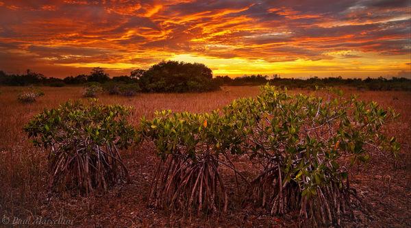 everglades, red mangroves, rhizophora mangle, sunset, Florida, nature, photography, florida national parks