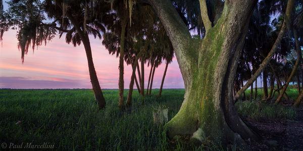 sabal palm, oak, sunset, myakka river state park, floodplain, florida, south florida, nature, photography