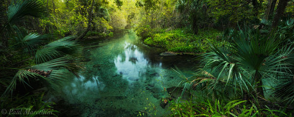rock springs run, springs, orlando, florida, UFHEALTH
