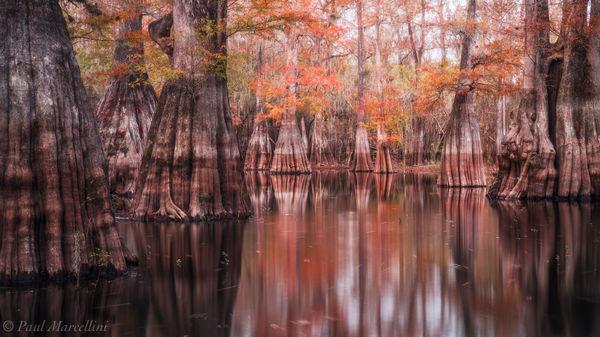 Suwannee Valley, Florida, autumn, cypress