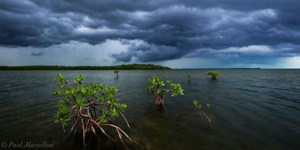 cold front, storm, card sound, mangrove, miami, florida