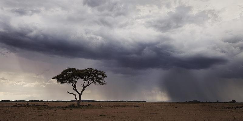 amboseli, kenya, africa, storm, acacia, photo