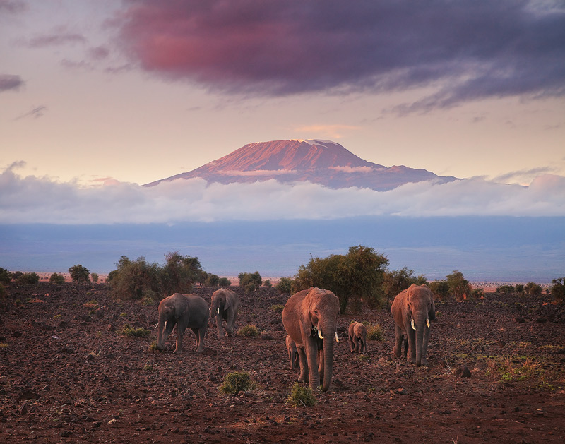elephants, kilimanjaro, amboseli, sunrise, kenya, africa, photo