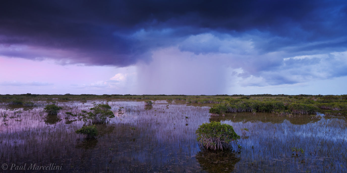 An imposing summer storm moves over the inland Red Mangroves just after sunset.