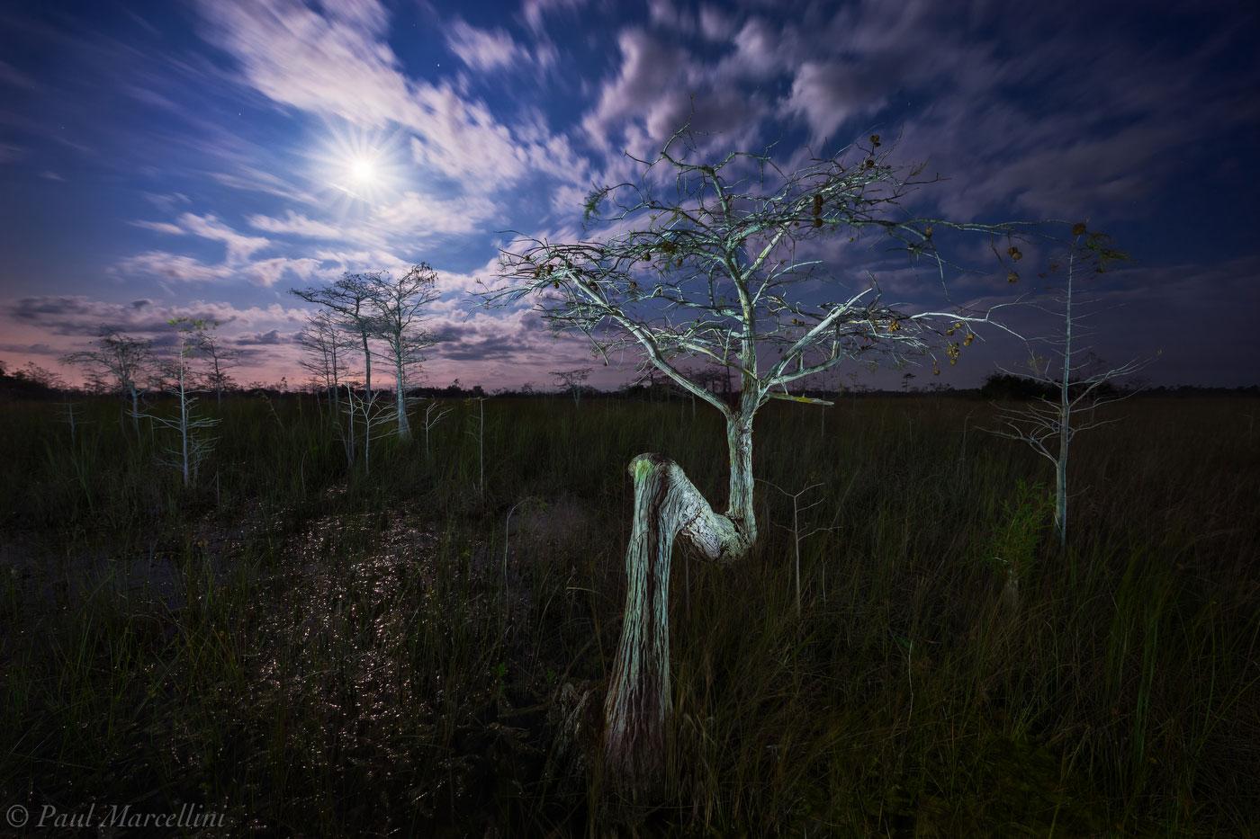 Everglades National Park, Florida, cypress, full moon, night, nature, photography, florida national parks, photo