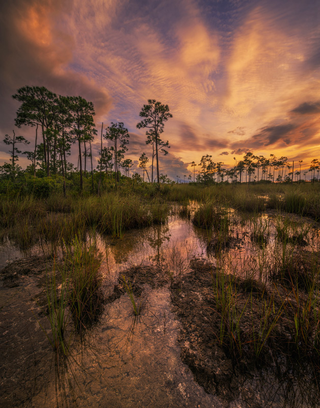 everglades national park, florida, nature, photography, photo