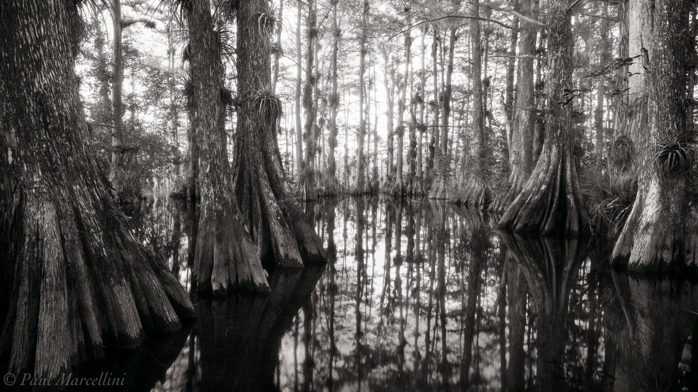 gator hook strang, Big Cypress National Preserve, Florida, nature, photography, photo