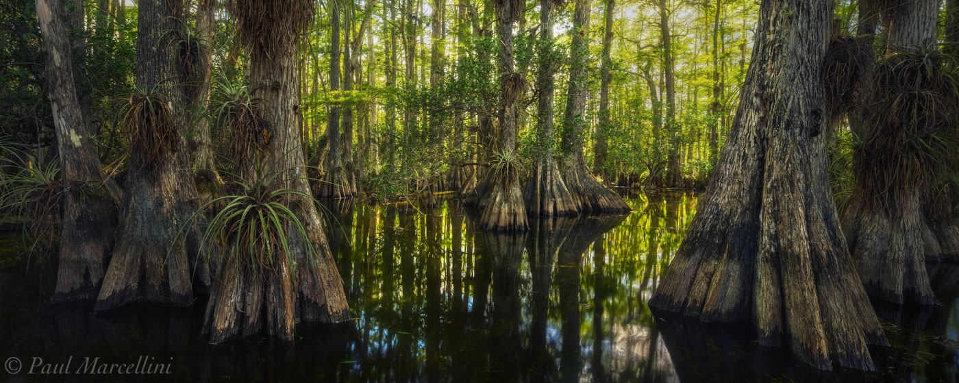 Big Cypress National Preserve, Florida, swamp, cypress dome, nature, photography, photo