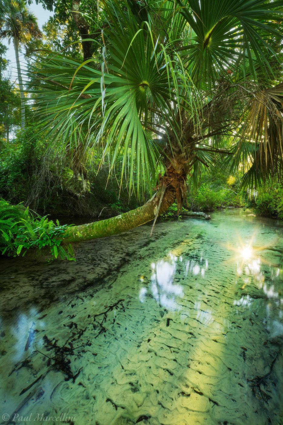 juniper springs, ocala, florida, clear water, juniper creek, nature, photography, photo